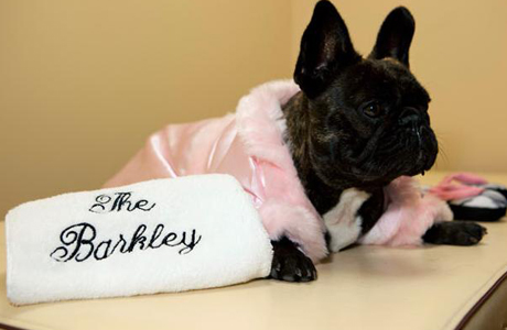 The Barkley Pet Hotel in Westlake Village